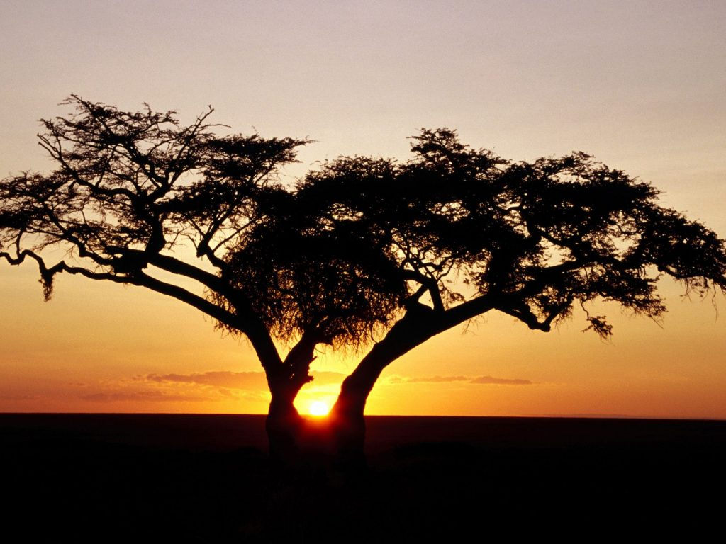 Future-Business-Africa