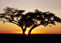 Future-Business-Africa